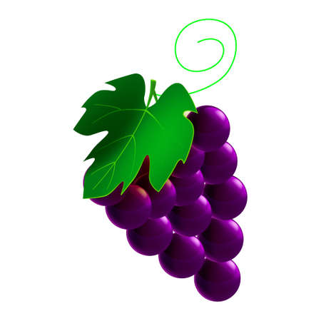 Grapes ripe, branch whole fresh organic, black color, icon. Vector illustration symbol icon cartoon