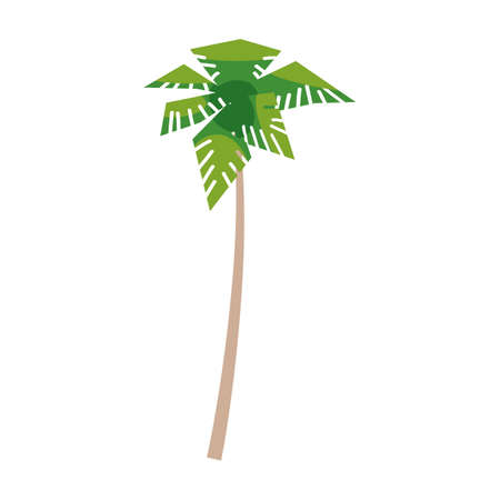Palm coconut tree tropical. Exotic floral plant with leaves isolated. Vector