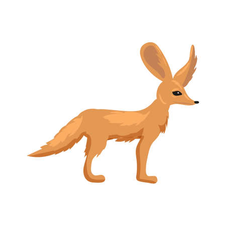 Fennec fox dessert cute animal mammal with big ears, pale color. Vector illustration 向量圖像