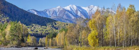 Panoramic view of autumn nature. Yellow trees and snow-capped peaks. Altai, Russia. 写真素材