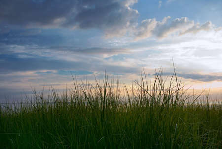 ablooming: grass and skies.