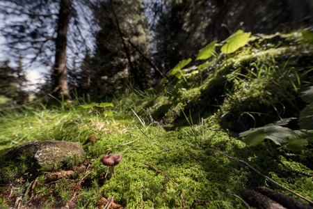 underbrush: underbrush
