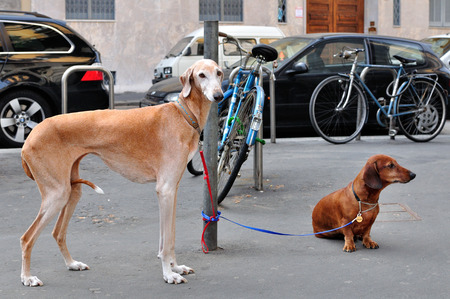 Dogs on a leash tied on hold photo