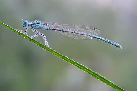 damselfly: dragonfly