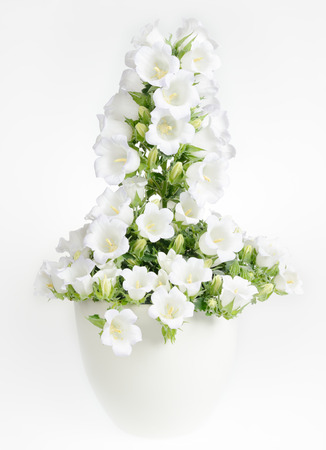 Potted plant with white flowers photo