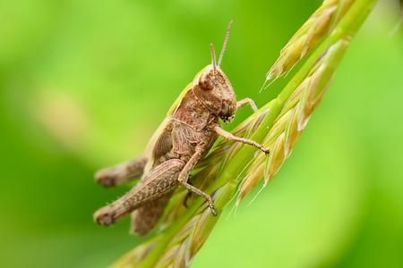 ravage: grasshopper on a leaf