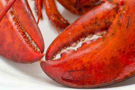American lobster with shrimp photo