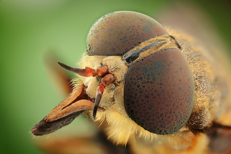 life extension: portrait of gadfly