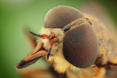 gadfly: portrait of gadfly