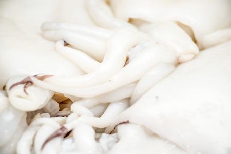 cuttlefish: cuttlefish  Stock Photo