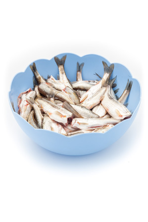 Raw fish in a blue bowl photo