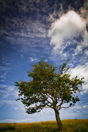 albero: Albero tra cielo e nuvole - Tree beetween sky and clouds Stock Photo