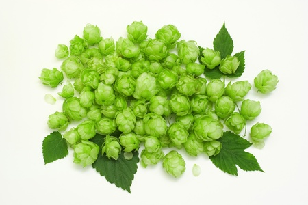 humulus: flowers and leaves of common hop Stock Photo