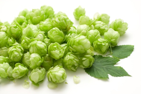 common hop: flowers of common hop