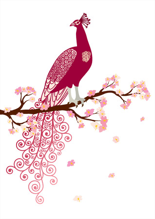 oriental season: Vector illustration of abstract purple peacock on the pink blossom tree branch on white background Illustration