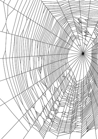 Vector illustration of spider web or cobweb on white background Illustration