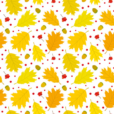 Autumn seamless pattern of Canadian oak39s leaves acorns and rowan berries. White background. Vector