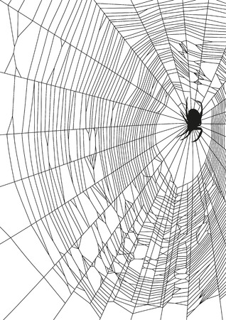 spider web: The vector illustration of web and spider on white background Illustration
