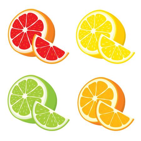 ベクトルは、白い背景の上のレモン、オレンジ、ライム、グレープ フルーツのスライスのセット。