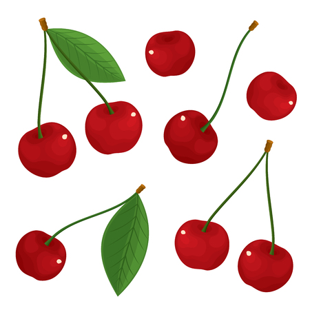 Vector set of isolated, fresh, ripe, succulent cherries in color. Illustration on white background. Illustration