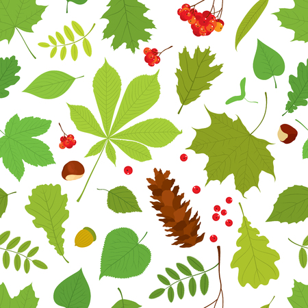 linden tree: Seamless pattern of different tree leaves - oak, chestnut, birch, Rowan, linden, jasmine, lilac, maple, willow, poplar, sycamore, Rowan berry bunch, acorn, pine cone on white background.