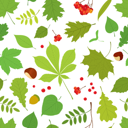 linden tree: Seamless pattern of different tree leaves - oak, chestnut, birch, Rowan, linden, jasmine, lilac, maple, willow, poplar, sycamore, Rowan berry bunch, acorns, nuts on white background.
