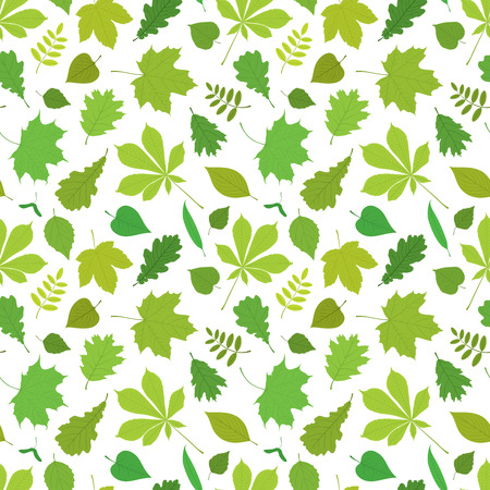 linden tree: Seamless pattern of different, isolated tree leaves - oak, chestnut, birch, Rowan, linden, jasmine, lilac, maple, willow, poplar, sycamore. Vector illustration in color on white background.