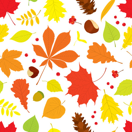 buckeye tree: Autumn seamless pattern of different tree leaves - oak, chestnut, birch, Rowan, linden, jasmine, lilac, maple, willow, poplar, sycamore, Rowan berries, acorns, pine cone, nuts on white background.