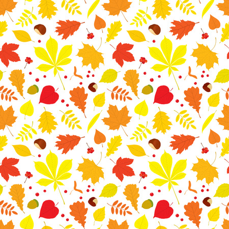 linden tree: Autumn seamless pattern of different tree leaves - oak, chestnut, birch, Rowan, linden, jasmine, lilac, maple, willow, poplar, sycamore, Rowan berries, acorns, nuts on white background.