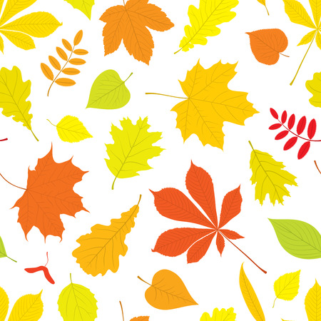 buckeye tree: Autumn seamless pattern of different, isolated tree leaves - oak, chestnut, birch, Rowan, linden, jasmine, lilac, maple, willow, poplar, sycamore. Vector illustration in color on white background. Illustration