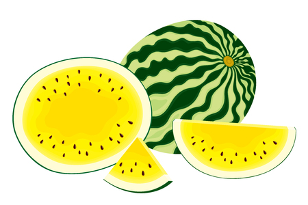 Vector illustration of isolated, fresh, whole watermelon, half and slices of yellow watermelon on white background. Illustration