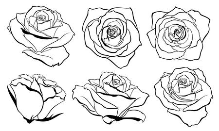 rose bud: Vector set of detailed, isolated outline Rose bud sketches in black color. Vector illustration for design on white background.