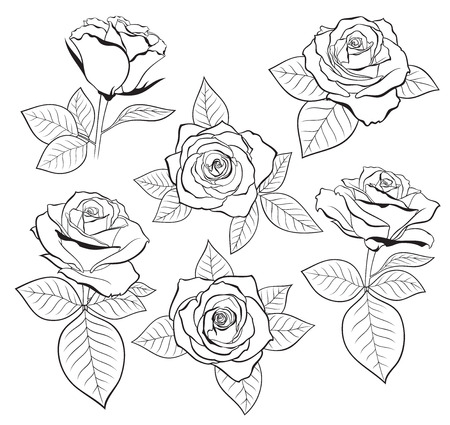 Vector set of detailed, isolated outline Rose bud sketches with leaves in black color. Vector illustration for design on white background. Ilustração