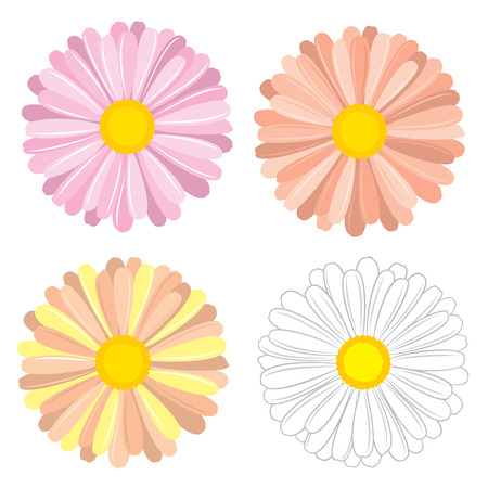 Floral, colorful vector set of chamomile and daisies for design on white background. Illustration