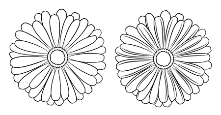Floral vector set of outline chamomile, marguerite and daisy for design on white background. Illustration in black. Çizim