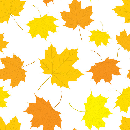 Autumn seamless pattern of maple leaves in yellow color on white background. Cover design. Vector illustration.