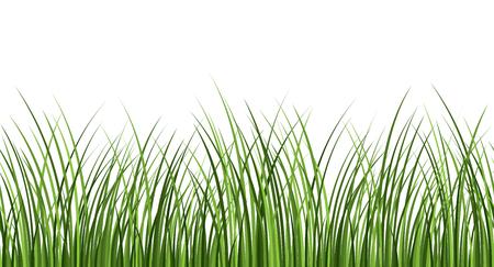 Seamless pattern of fresh green grass on white background. Cover design. Vector illustration.