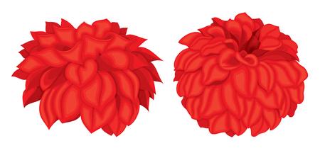 Vector set of detailed, dahlia buds on white background. Illustration for design. Ilustração