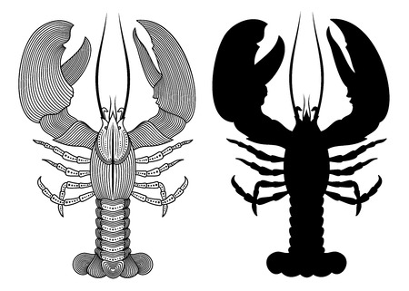 Vector illustration of outline decorative lobster and lobsters silhouette