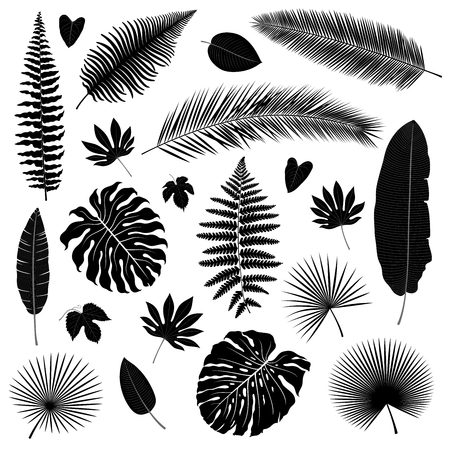 Vector set of isolated tropical leaves silhouettes