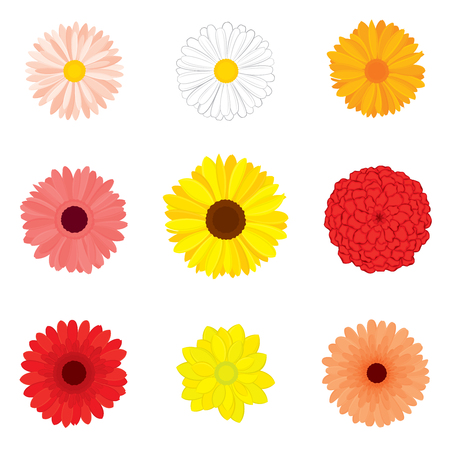 Vector set of detailed, realistic, various flower buds