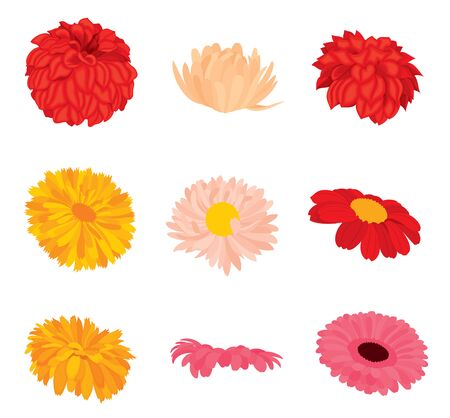Vector set of detailed various flower buds side view