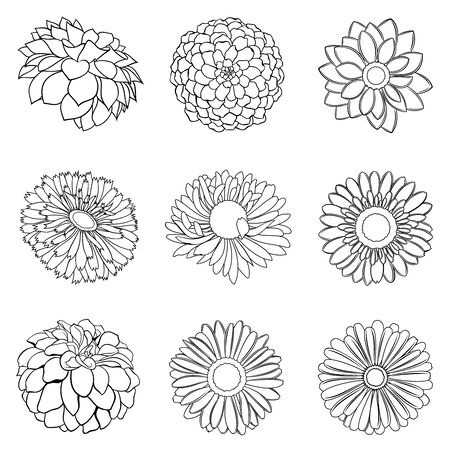 Vector set of various outline flower buds