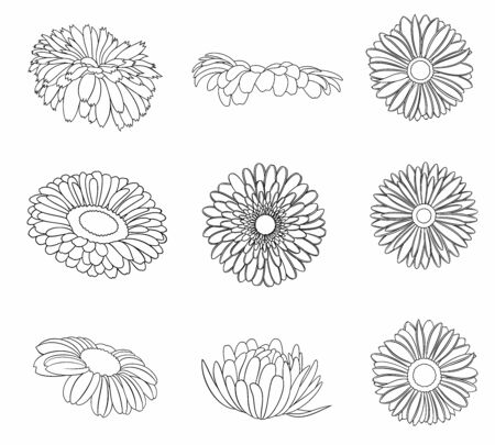 Vector set of detailed, realistic various outline flower buds 일러스트