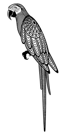 Vector illustration of  decorative, isolated, sitting parrot in black color, on white background