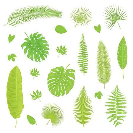 Vector conjunto de hojas tropicales aisladas, coloridas y detalladas sobre fondo blanco. Ilustración para el diseño. Ilustración de vector