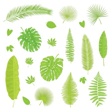 Vector set of isolated, colorful, detailed tropical leaves on white background. Illustration for design.
