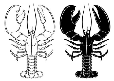 Vector illustration of outline, detailed lobster and his silhouette in black color, isolated on white background.