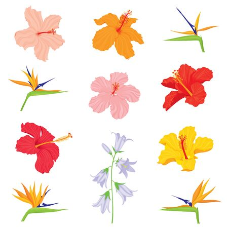 Vector set of various, exotic, realistic, detailed tropical flower buds: bellflower, hibiscus, strelitzia in color, isolated, on white background.