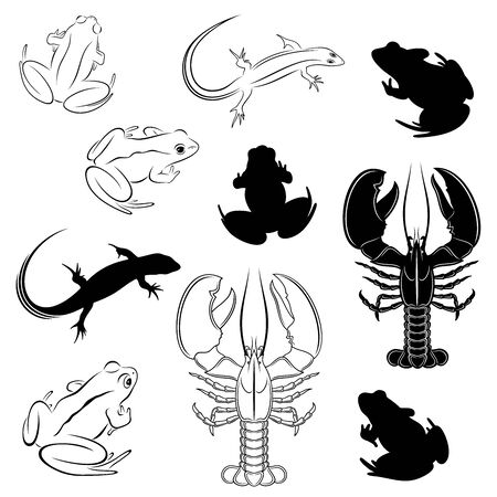 Vector set of outline, detailed frogs, lobster and lizard, and their silhouettes, isolated, in black color, on white background.